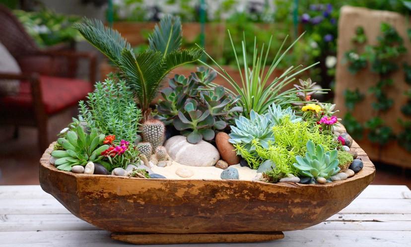 Lựa chọn cây trồng cho ban công chung cư