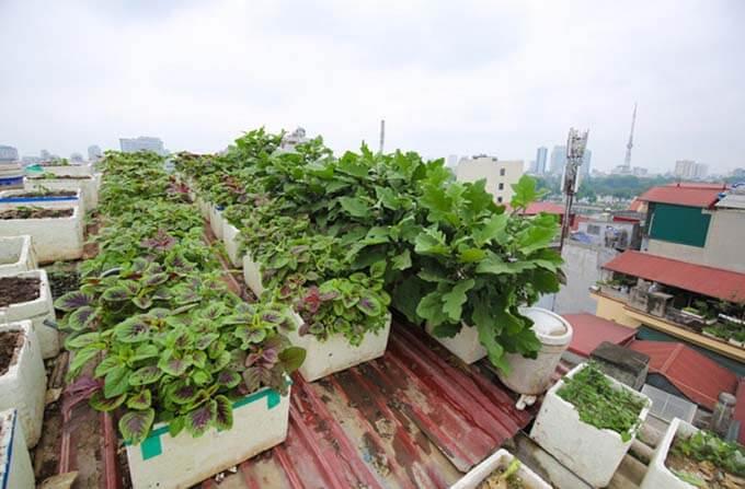 Thông gió cho nhà mái tôn bằng cách trồng cây leo